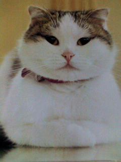 '08カレンダー CREA ネコ